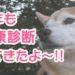 2019年柴犬まるの健康診断報告&ネクスガードスペクトラでノミダニ予防!