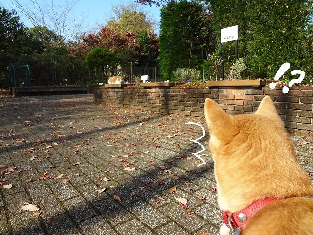 可愛い猫ちゃんに出会いました!昭和記念公園には猫が住み着いている!?出会えたらレアかもしれない!?