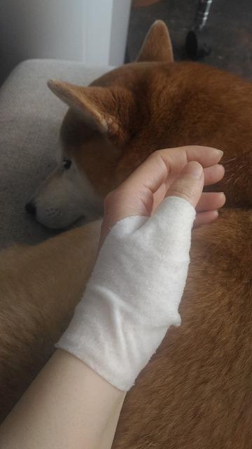 柴犬の散歩に行き過ぎて手が腱鞘炎になったことについて語る。