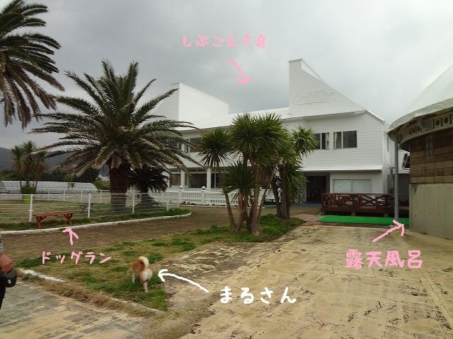 しぶごえ千倉に泊まってきました!オーシャンフロントの綺麗な部屋で愛犬と過ごす!