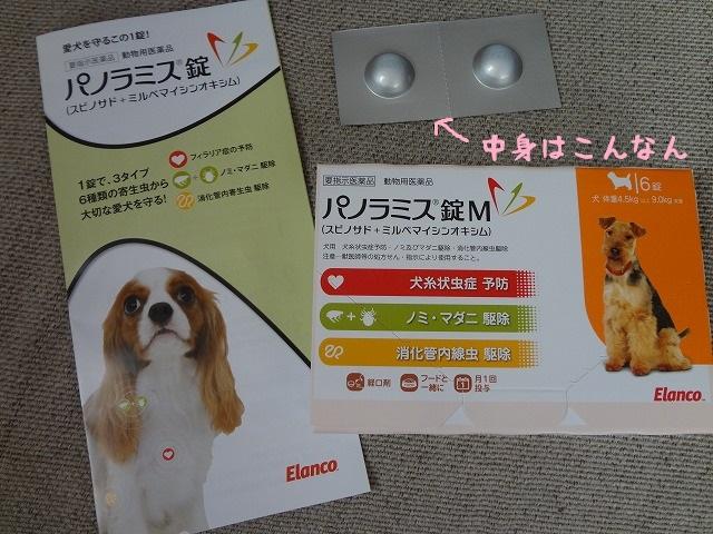 パノラミス錠で愛犬のノミ・ダニ・フィラリア症を予防する!1錠でって凄すぎない!?