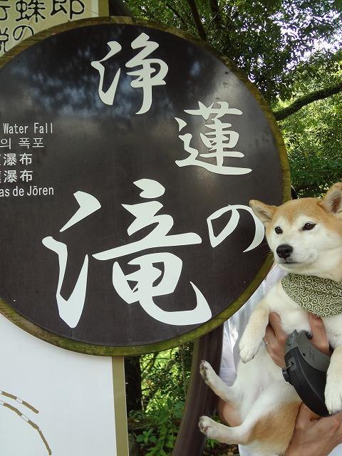 浄蓮の滝で柴犬まるとまったり滝の音を聞いて癒されてみた!