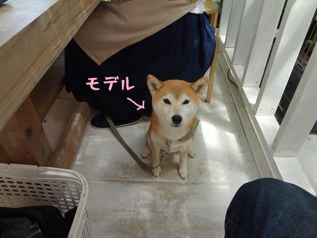 伊豆高原で愛犬と一緒に陶芸!ほけきょ庵でワンシーサーを作ってみた!