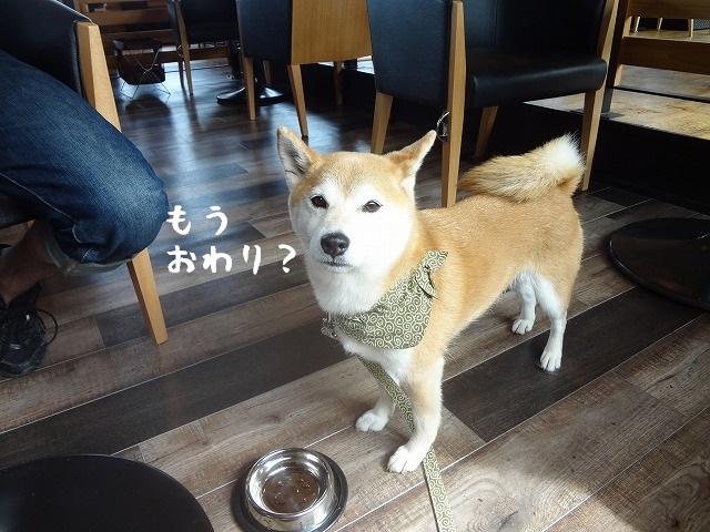 2016年3月24日オープン!「愛犬の駅」伊豆高原に柴犬まるといってきました!