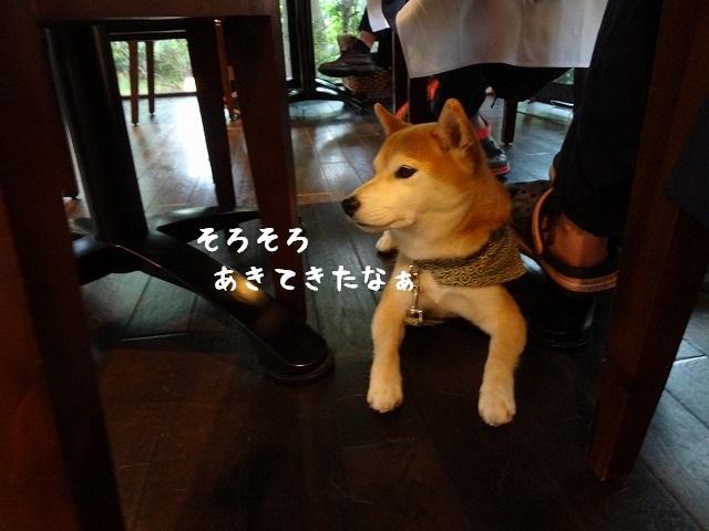 ②ウブドの森 伊豆高原に泊まる!夕食はワンちゃんバイキングでリッチな気分!?