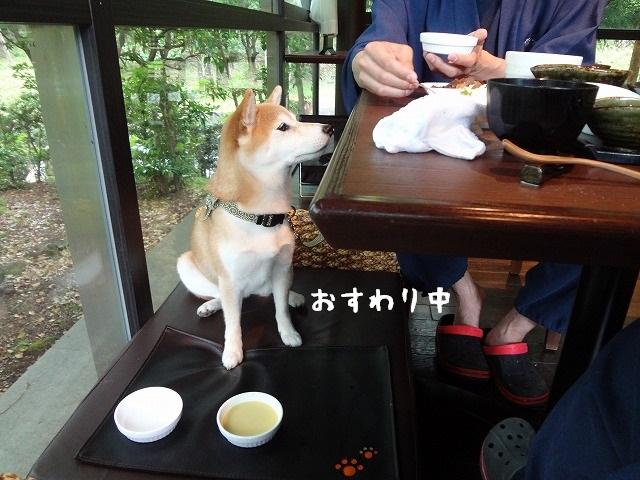 ④ウブドの森 伊豆高原に泊まる!美味しい朝食を食べてホテルの良さを振り返る!