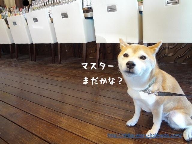 心が病んだらとりあえず昭和記念公園とカフェガレージで柴犬と気分転換をする!