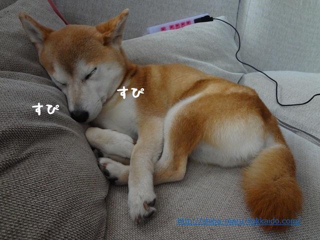 柴犬まるが腸炎になっていました。