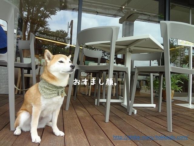 立川でペット可「キットボックス コトブキヤ カフェ」で柴犬まるとダンボーくんとまったり