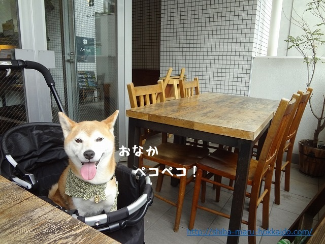 吉祥寺の犬同伴OK『八十八夜』に柴犬まるといってきました!