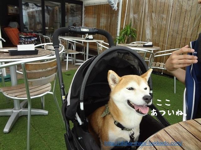 柴犬まると吉祥寺を満喫!ペットOKの『ソラ ZENON』でランチを楽しむ!