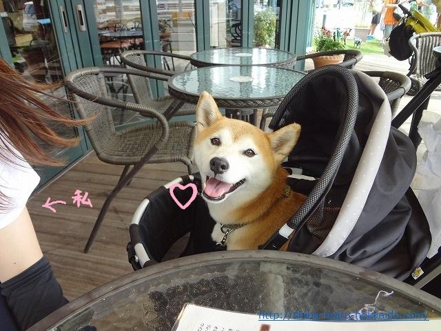 立川サロンド・テ・チーズ王国で柴犬まるとチーズとワインでほろ酔い気分!