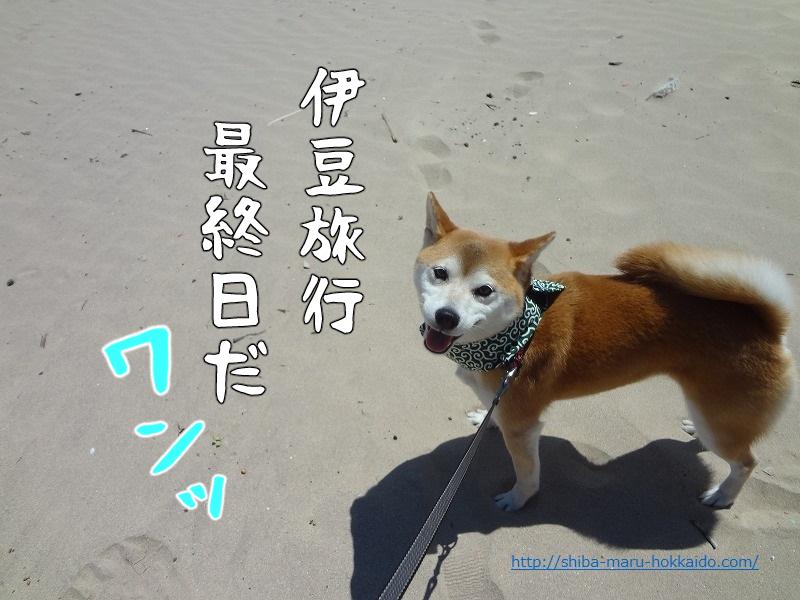 【動画あり】海辺で遊ぶ柴犬まるが可愛すぎてずっと見ていたい