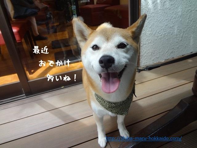 立川の隠れ家Cafe「カフェリエーナ」に柴犬まるといってきました!
