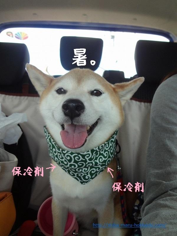 伊豆高原道中日記「愛犬の駅」のスタッフの優しさに感動する私と柴犬まる