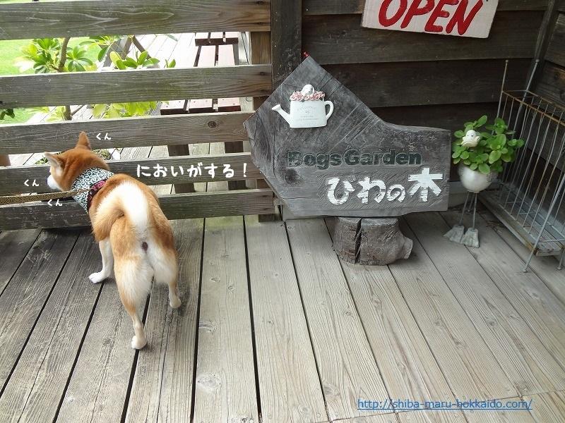 伊豆下田でワンコが遊べる喫茶「びわの木」に柴犬まるといってきました!