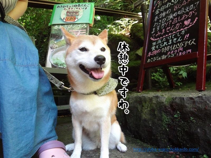 柴犬まると浄蓮の滝で休憩!わさびラムネが意外な味!?