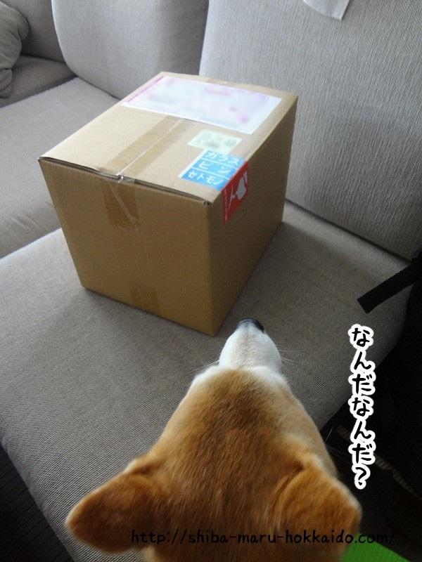 伊豆高原で作った柴犬まるをイメージしたワンシーサーが届きました!~ほけきょ庵~