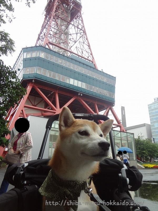 柴犬まると札幌大通りをぷらぷら!ベンチに座ってあげいもをいただく~!
