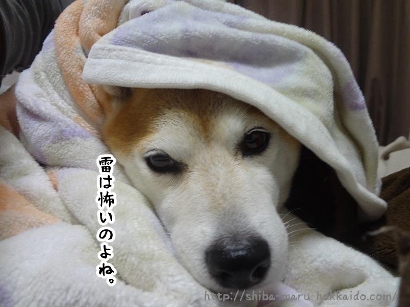 気分が優れない日は雷に怯える柴犬まるとお昼寝をしてみる。