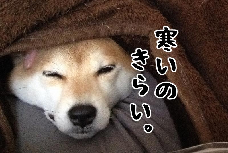 どさんこ寒がりアサラー主婦が東京の冬を乗り切る対策を勝手に発表