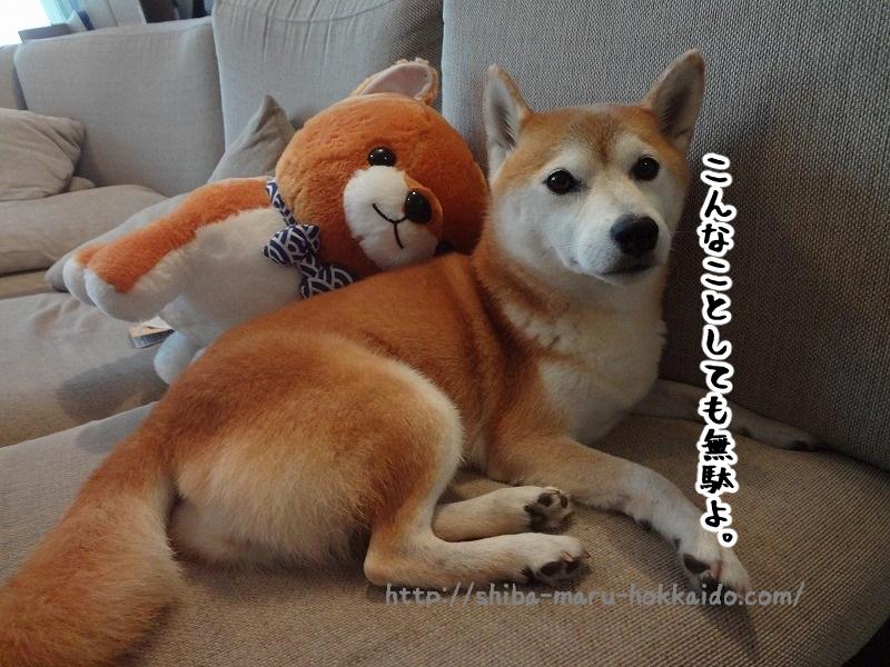 柴犬大好き夫婦が四千円でららぽーと立川立飛を楽しんでみた!