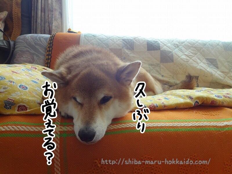 【動画あり】柴犬太郎と久しぶりに会えたのでまとめてみた