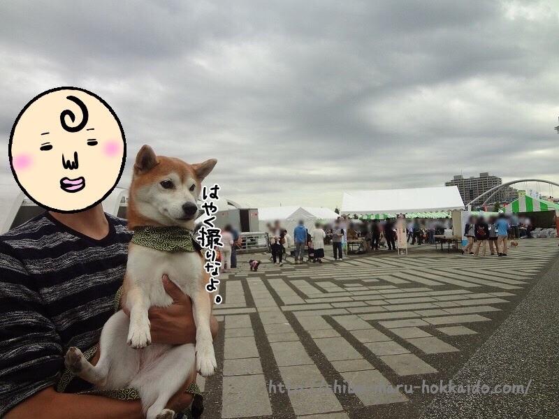 柴犬まると「わんわんカーニバル2016駒沢公園」に参加してきました!