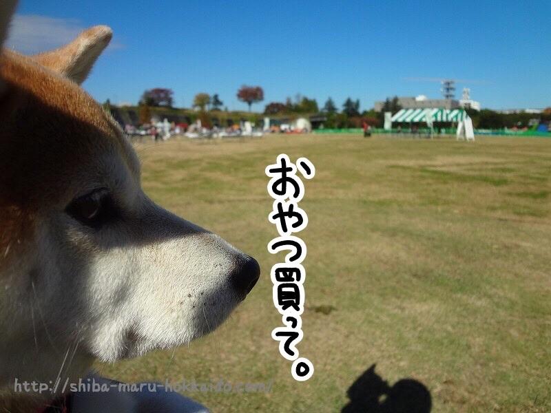 立川ペットのイベント「しっぽフェスタ2016」に柴犬まるといってきました!