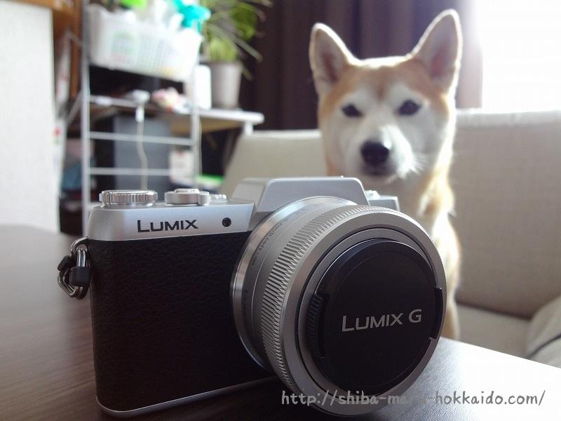 柴犬まるを撮るためにミラーレス一眼カメラLUMIX(ルミックス) DMC-GF7を買いました!