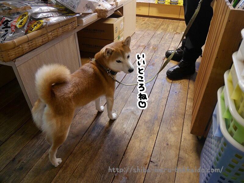 愛犬と一緒に信州のお土産選び!「ぱいんはうす」にいってきました!
