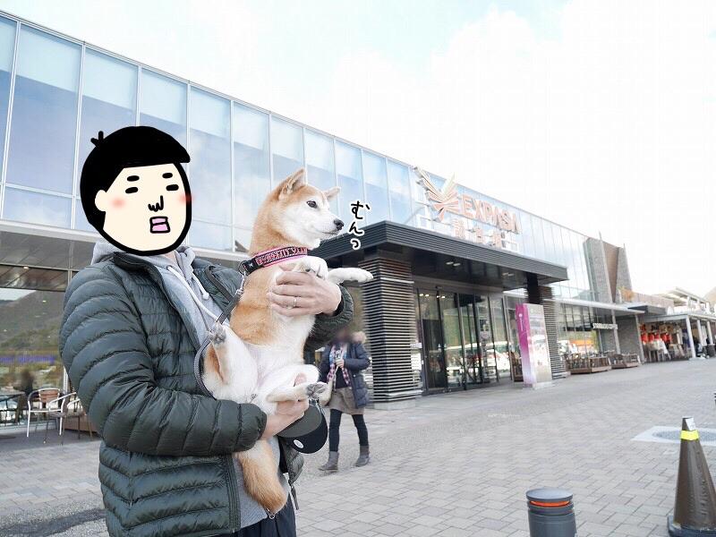 実際にいってきました!東京・長野間のドッグラン付きサービスエリアを紹介!