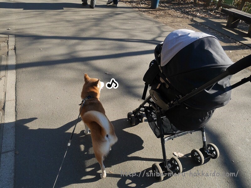 柴犬まるとコムペットミリミリに乗って吉祥寺へ!井の頭公園でのんびり日向ぼっこ!