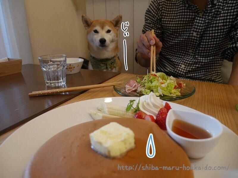 吉祥寺「goodtime(グッドタイム)」で柴犬まるとパンケーキを食べてきました!