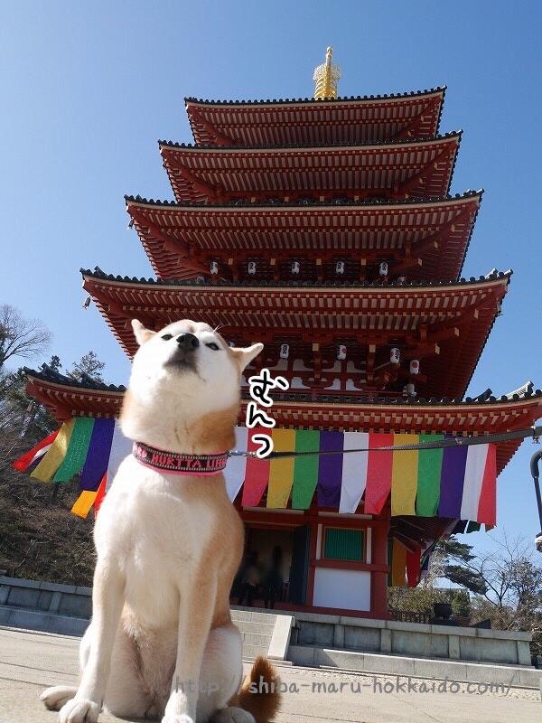 あじさい園を散策〜!柴犬まると高幡不動尊にいってきました!