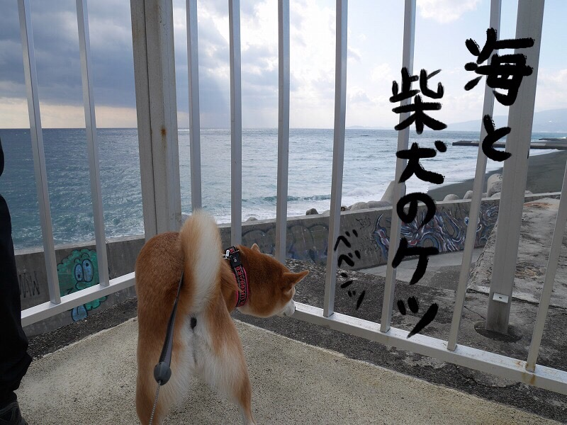 柴犬まると西湘PA(パーキングエリア)下りに寄ってみました~!