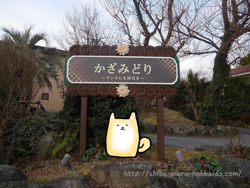 柴犬まると伊豆高原へ!「かざみどり」に泊まってきました~!