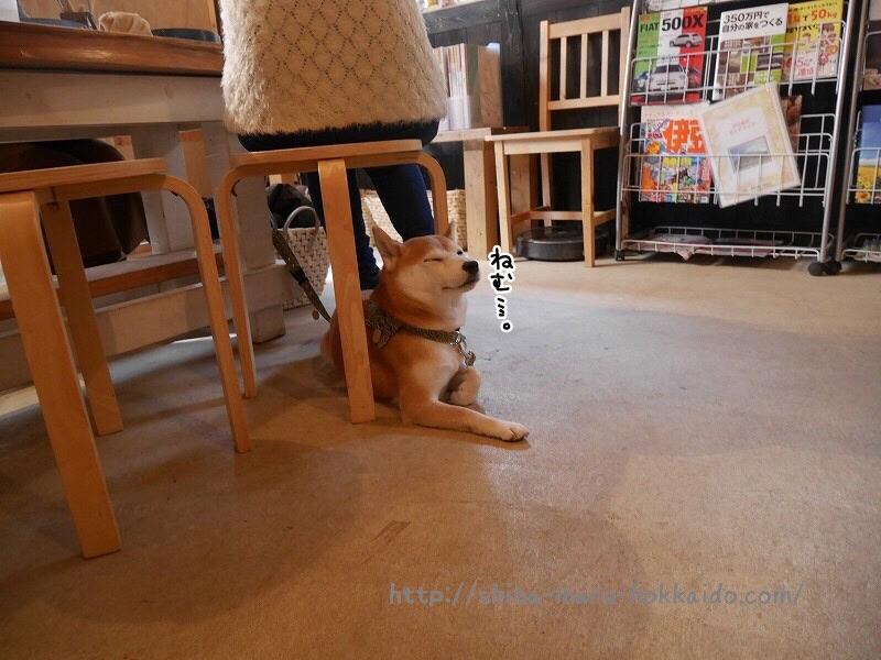 柴犬まると「伊豆高原わんこの森」で手びねり柴犬作りをしてきました!