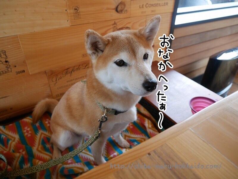 柴犬まると伊豆高原へ!「愛犬の駅」でランチをしてきました~!