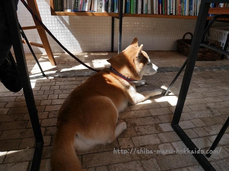 柴犬まると散歩がてらの朝食「SOUP&CAFEなんでもない日」にいってきました!