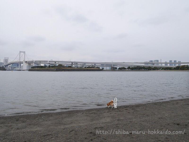 お台場海浜公園「おだいばビーチ」に興奮しすぎる柴犬まるが可愛すぎた!