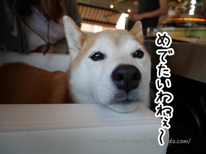 立川ペットOK『カフェガレージ』に柴犬まると行ってきました!