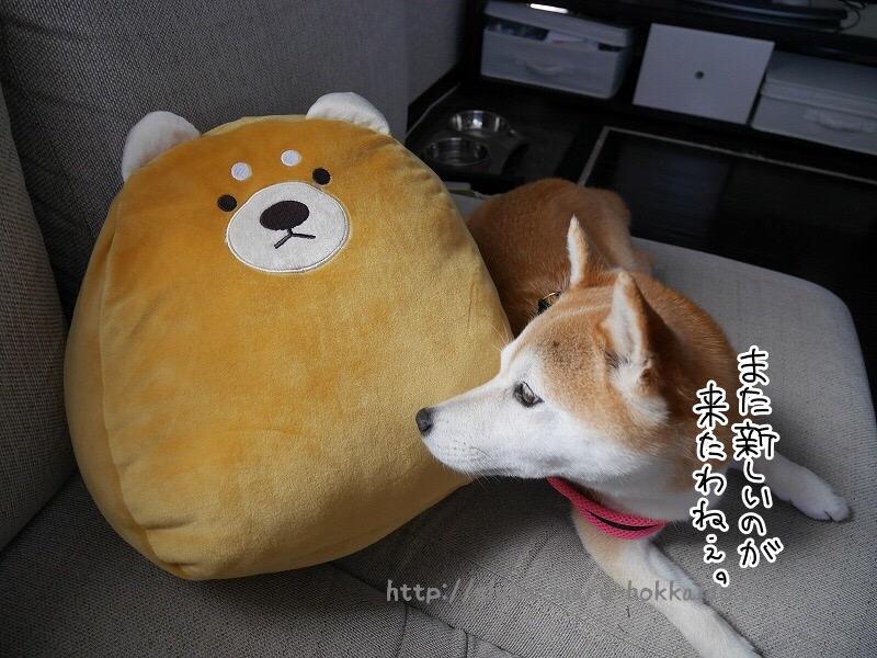 まさかのいなげや!?柴犬の可愛いクッションをゲットしました~!