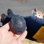 柴犬まると大涌谷で黒卵を食べてみた!どんな味なの?7年寿命が延びたかな~?