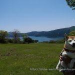 旅行中愛犬が走り回れる場所「富士芦ノ湖パノラマパーク」に柴犬まるといってきました!