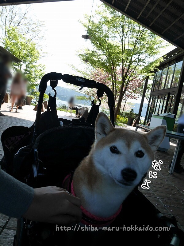 柴犬まると芦ノ湖テラス「ラ・テラッツァ」でピザを食べてきました!