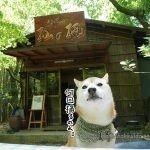 柴犬まると箱根塔ノ沢の「杣の栖 (そまのすみか)」で蕎麦を食べてきました!