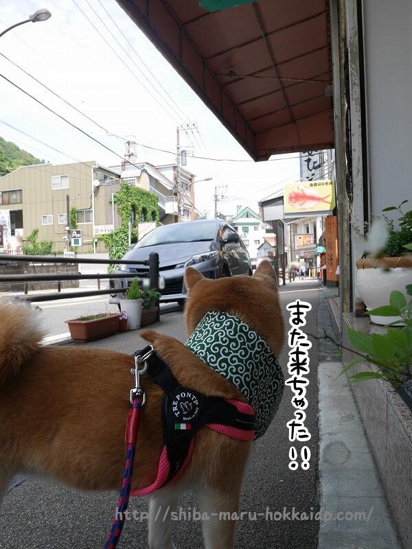 柴犬まると箱根湯本を散歩~!ソフトクリームに干物にプラプラ楽しむ!
