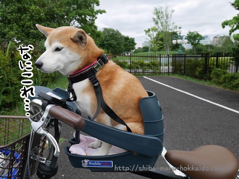 柴犬まると自転車に乗りたい!ALPHAICONの「バディーライダー」を買ってみました!
