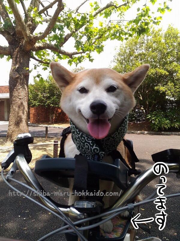 自転車用ペットシート「バディライダー」のクッションを手作りしてみた!